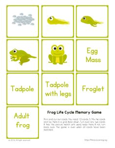 This frog life cycle printable memory game is great to reinforce the knowledge students already gained and have a fun time learning. Frog Games, Articles For Kids, Lifecycle Of A Frog, Frog Life, Typing Games, Memory Games, Life Cycles, Homeschool, Printables