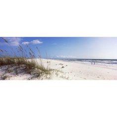 Tall grass on the beach Perdido Key Area Gulf Islands National Seashore Pensacola Florida USA Canvas Art - Panoramic Images (48 x 16)