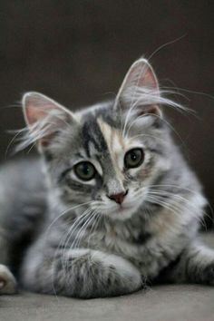 cute and beautiful!