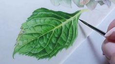 Watercolor Hydrangea Leaf
