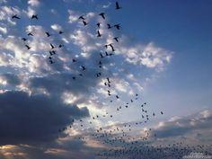 """و كُلما همس قلبي❤️  بِـ : """" الحمدُ لله' """" ،  ``طارت طيور الحزن الحبيسة في صدري ..♡ ❤❤"""