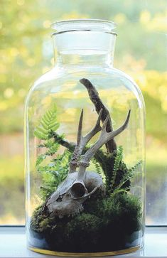 Terrariums: beautiful enclosed gardens you can build at home The Victorian terrarium, a glass container filled with plants, is making a comeback. Here are some examples from leading terrarium designer Ken Marten. Mini Terrarium, Terrarium Cactus, Succulent Planters, Hanging Planters, Terrarium Closed, Fairy Terrarium, Terrarium Wedding, Glass Terrarium, Air Plants