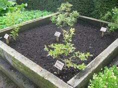 Make an Ericaceous Soil Bed for Acid-Loving Fruits