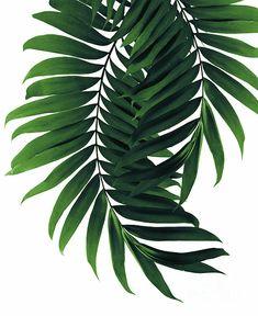 Palm Leaves Tropical Green Vibes #2 #tropical #decor #art Fleece Blanket