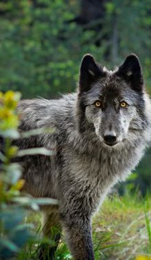 Beautiful-wildlife: Rogue IntentbyAndrea Borden