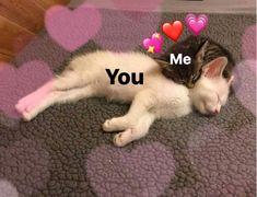 Comics Spideypool y Stony – Funny Memes Cute Cat Memes, Cute Love Memes, Funny Memes, Dankest Memes, Funny Quotes, Spideypool, Memes Amor, Memes Lindos, Heart Meme