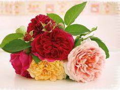1024x768 Wallpaper roses, flowers, leaves, flower, lie, blurring