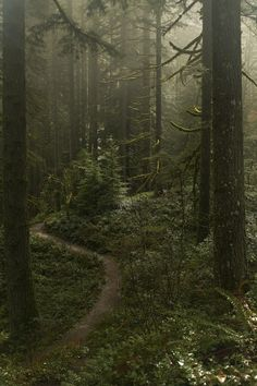 The stunning and mystical Silver State Park, by Anna Calvert. Source: accio-forest on Tumbler