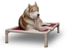Kuranda dog bed.  They use this at the rescue where I volunteer.  I just ordered two for home.  Tired of having beds chewed, peed on, or vomited on.  You can never get the smell out.  These Kuranda dog beds are easy to clean, and I've ordered a soft topper that I can wash in the washing machine (or use towels).