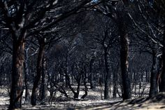 Charred trees after a wildfire in Mazagon, near the Donana National Park in Spain, on June 26, 2017.