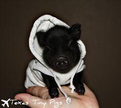Pig in a hoodie