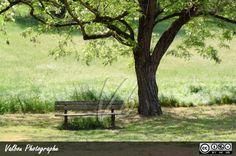 Une journée au Parc