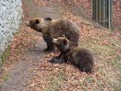 Centro Orso - Spormaggiore Amusement Parks, Brown Bear, Italy, Animals, Italia, Animales, Animaux, Animal, Animais