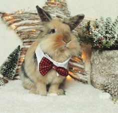 "499 mentions J'aime, 2 commentaires - We love Bunny (@we_lovebunny) sur Instagram : ""Hopefully our christmas card will arrive soon to some of my dear friends. I want to thank you all a…"""