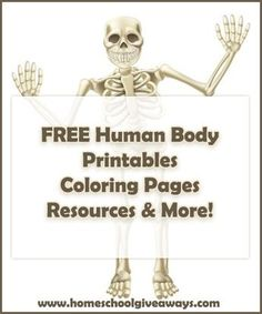 Human anatomy printables; Anatomy; Classical Conversations Cycle 3 Science