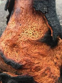 This burned tree has a very intricate pattern underneath the bark. : pics