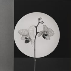 The Eye of Photography asked the galleries exhibiting at Photo London to each present five photographs to be purchased. Alison Jacques Gallery presents selected works by Robert Mappelthorpe.