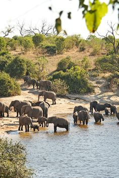 Chobe National Park is home to Africa's largest population of elephants. #Jetsetter