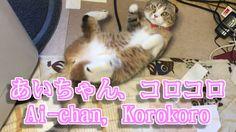 あいちゃんコロコロ【可愛い猫のおもしろい動画】