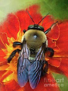 Bold And Beeautiful Carpenter #Bee by Anita Faye