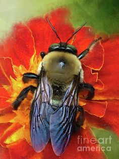 Bold And Beeautiful Carpenter #Bee by Anita Faye