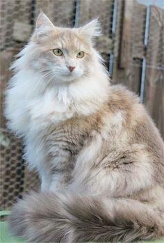Great... Beautiful Cats Gif #google