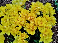 Mitchell: A Burst of Yellow #flower #colour #life #growth #beauty #phonetography