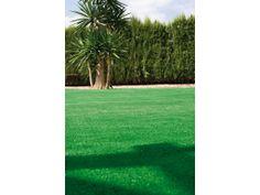Catral Garden, specialist in garden, cultivation and decoration Garden, Plants, Artificial Turf, Garten, Gardens, Planters, Tuin, Plant, Planting