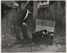 Polish-born American photographer Arthur 'Weegee' Fellig (1899 - 1969) peers into an opened steamer trunk that contains the bound body of a murder victim, Brooklyn, New York, August 5, 1936. The victim, identified as William Hessler, had been stabbed to death and his body put into the trunk. Apparently preparing to sink it in the Gowanus Canal, the murderers were inturrupted and abandoned it in an empty lot. (Photo by Weegee(Arthur Fellig)/International Center of Photography/Getty Images)