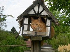 Though they claim to the contrary, cats make terrible dinner guests at the bird table. Cats normally known for their sophistication . Fresco, Bird Tables, Cat Garden, Domestic Cat, Bird Watching, Crazy Cats, Bird Houses, Animal Pictures, Cats And Kittens