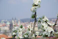 Весенняя Прага Plants, Plant, Planets