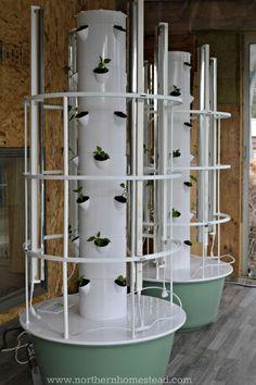 Planting a Hydroponic Garden