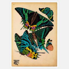 Hope the artist decides to transfer these prints onto textile for clothing! Butterflies Plate 7 16x20 now featured on Fab.