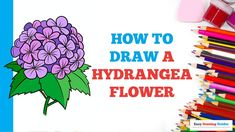 Cartoon Drawing Tutorial, Cartoon Drawings, Easy Drawings, Hydrangea Not Blooming, Hydrangea Flower, Flowers, Craft Projects For Kids, Arts And Crafts Projects, Six Sided Shape