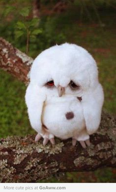 "I just saw this link somewhere..This owl is sooo adorable...  ""He punched me..."""