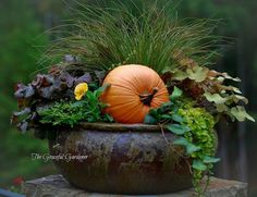 The addition of the pumpkin to the container garden adds fall color!!! Bebe'!!! Great idea!!!