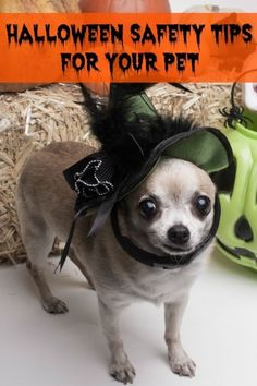 Halloween Safety Tips for Your Pet | eBay