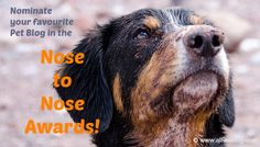 Don't Miss the Nose-to-Nose Pet Blogging and Social Media Awards Nominations