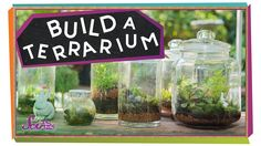 Jessi and Squeaks just learned about terrariums, and now they want to make one for themselves! Join them to learn all about these tiny gardens in a bottle an...