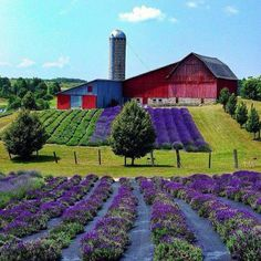 Lavender Hill Farms in Boyne City, Michigan, USA. (Photo by Midwest Living Magazine) The Farm, Country Barns, Country Living, Country Life, Country Roads, Boyne City, Beautiful Places, Beautiful Pictures, Beautiful Farm