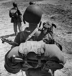 10 Photos Of War Dogs - Dogtime War Dogs, Hiroshima, Nagasaki, Military Dogs, Iwo Jima, Vintage Dog, Life Magazine, World History, History Online