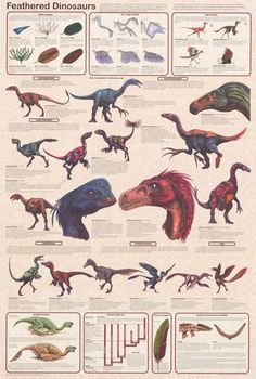 Science suggests that modern-day birds were descended from Feathered Dinosaurs! A great infographic poster for students of Pre-History. Fully licensed. Ships fast. 24x36 inches. Check out the rest of Dinosaur Facts, Dinosaur Posters, Dinosaur Fossils, Feathered Dinosaurs, Dinosaur Pictures, Jurassic Park World, Extinct Animals, Prehistoric Creatures, Prehistoric Dinosaurs