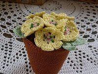 Pot of Primroses