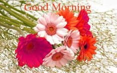 157+ Good Morning Flowers Images Photos Pics HD Download Here