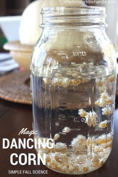 Dancing Corn Thanksgiving Science Activity