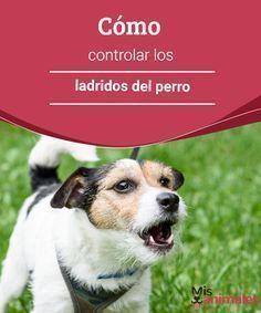 Cómo controlar los ladridos del perro Aprende a controlar los ladridos del perro en este texto de Mis Animales en el que te damos una serie de consejos útiles para tal fin. #controlar #ladridos #perro #adiestramiento
