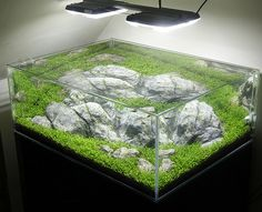 Almost square aquascape with glosso by George Farmer