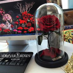 + 🍀Розы не требует ухода 🍀Не требует полива🌬 🍀Гарантия 3 года💡 Заявки по сотрудничеству WatsApp/Viber +7(916)993-05-87 💸 #роза #цветы #розавклоше #розавколпаке #розавстекле #розавкуполе #розавколбе #rose #flowerpower #flower #флористика #свадьба #декор #красавицаичудовище #цветок #цветывколпаке #цветывстеклах #цветывколбе #цветывклоше #цветывстекле #колба #роза #цветы #belle #bellarosa #bellerosa #bella #розанастебле #розавклоше #подарок