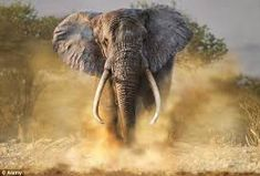 Image result for elephant images