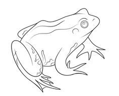 printable frog colouring pages for preschoolers  anaya